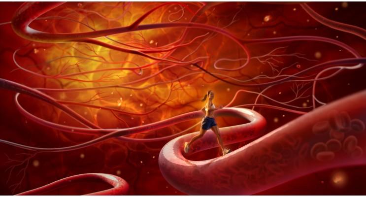 Здрава кръвоносна система (прояилактика на атеросклероза)